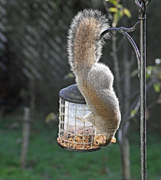 This is a different hometown squirrel